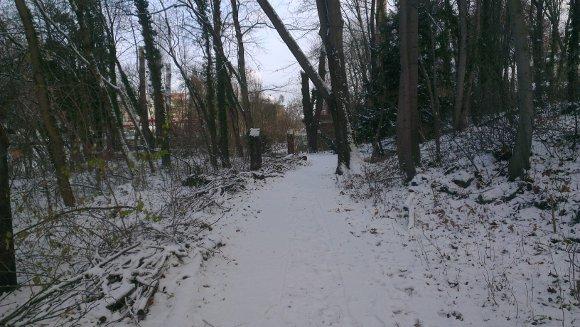 Bienertwäldchen mit Schnee 2