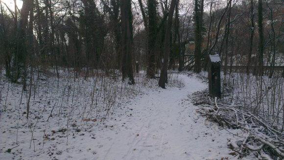 Bienertwäldchen mit Schnee