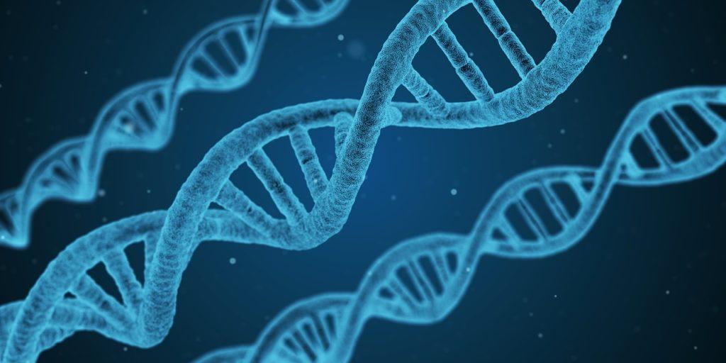 Genetik -Die DNS - Diese Veranlagungen gibt es: 3 Körpertypen & ihr Muskelaufbau