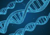 Genetik -Die DNS
